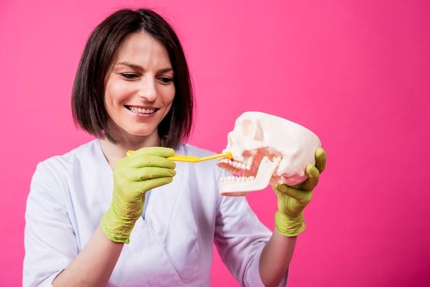 Dentista donna che lava i denti di un teschio artificiale usando un singolo spazzolino trapuntato