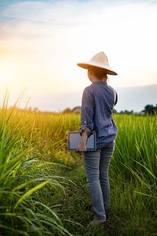 Contadina che utilizza una tavoletta digitale mentre si trova in piantine di riso verde in una risaia