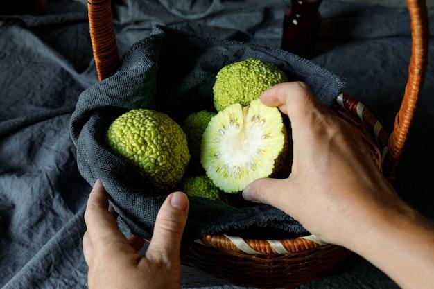 La donna piega i frutti di osage orange maclura pomifera nel cestello