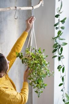 Libero professionista della donna che tiene il gancio della pianta del macrame con il tradescantia della pianta d'appartamento sopra il muro grigio