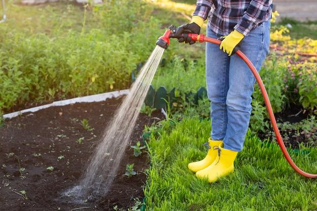 Giardiniere della donna che innaffia i suoi letti da giardino con tubo flessibile sulla soleggiata giornata di primavera calda. cura delle piante per la nuova stagione