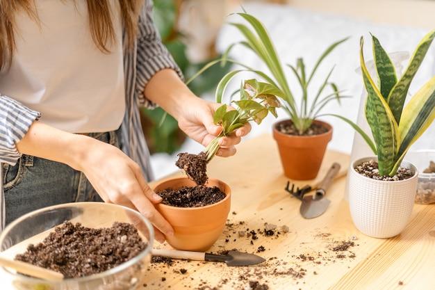 Pianta d'innaffiatura dei giardinieri della donna