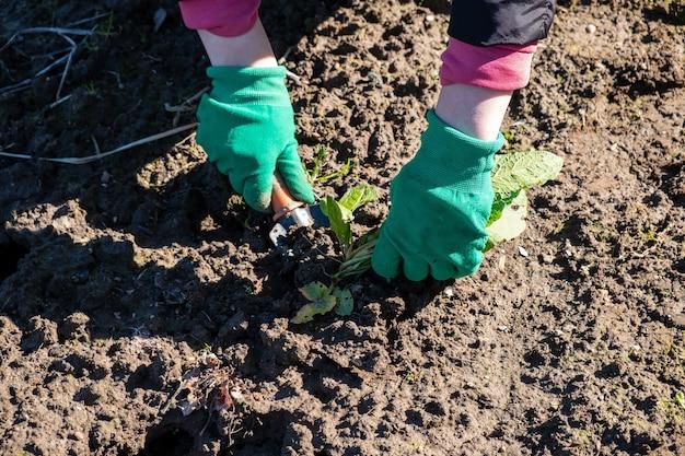 Una donna in guanti rimuove le erbacce dal suo giardino con uno strumento speciale