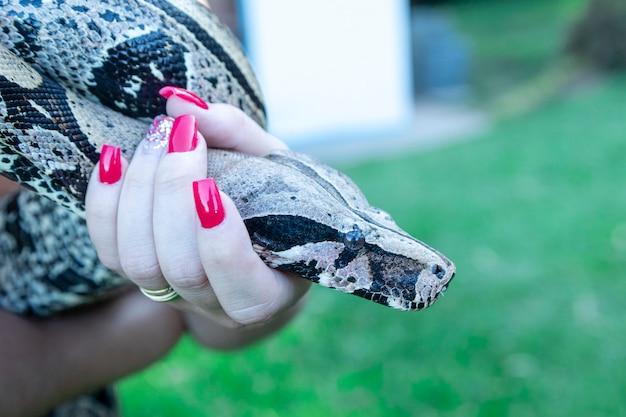 Mano della donna che tiene un serpente boa constrictor