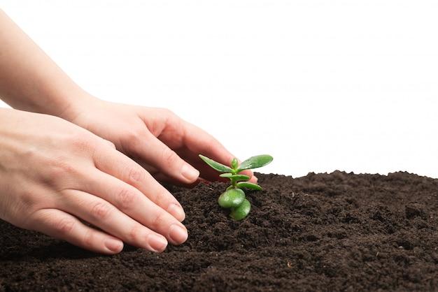 Mano della donna che tiene giovane germoglio verde nella terra.
