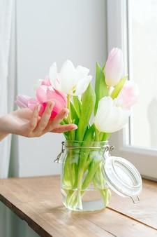 Germogli commoventi della mano della donna dei tulipani in un vaso sul davanzale