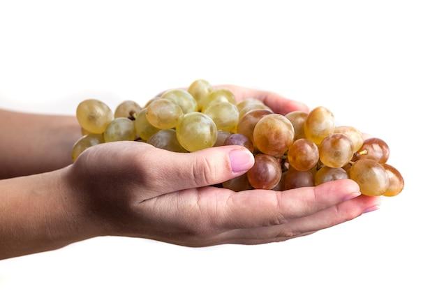 Mani di donna in possesso di un grappolo di uva verde, isolato su sfondo bianco