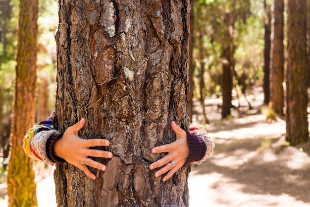 Le mani della donna abbracciano un pino nella foresta per la natura amore e sentimento e cura e rispetto concetto - nessun inquinamento e stile di vita alternativo per il piacere all'aperto - felicità e contatto con la madre terra