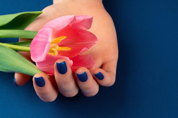 Mani della donna con il manicure che tiene i tulipani variopinti su fondo blu