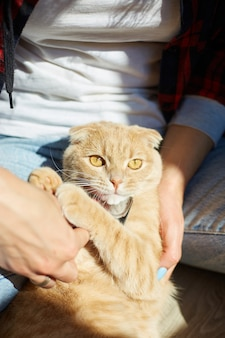 La donna tiene il gatto rosso britannico e lo pettina la pelliccia, la femmina si prende cura dell'animale domestico a casa con la luce del sole, luce dura.