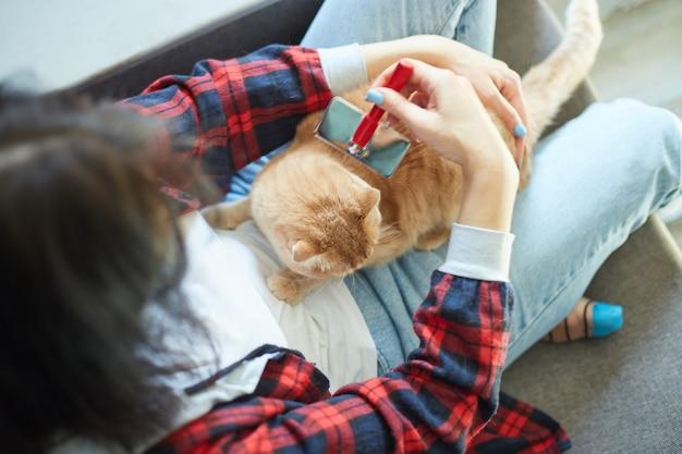 La donna tiene il gatto rosso britannico e lo pettina a casa.