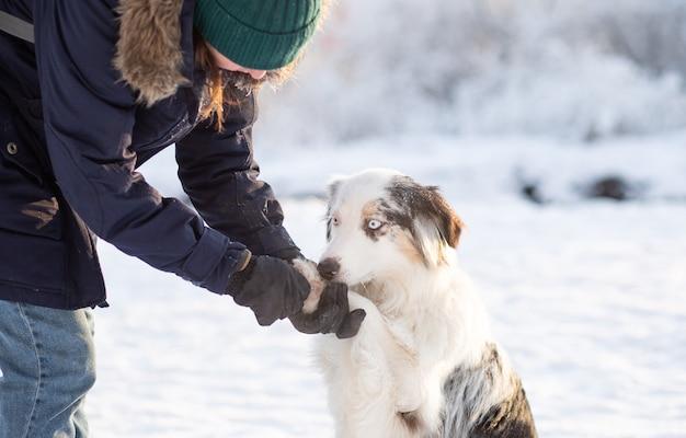 Donna che tiene la zampa del cane da pastore australiano con pezzi ghiacciati e salati