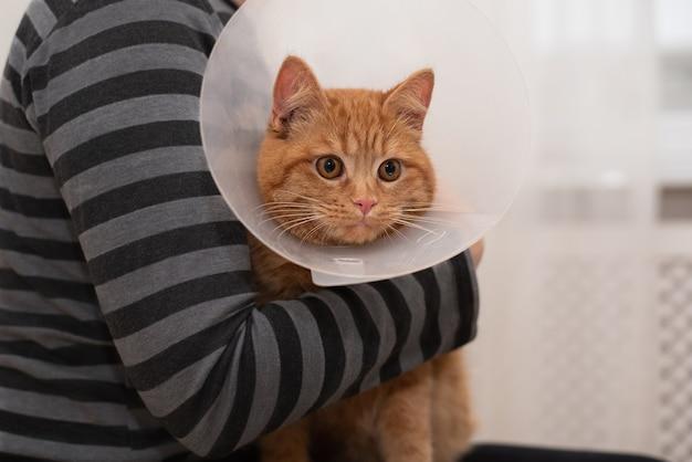 Donna che mantiene gatto con collare elisabettiano veterinario nella clinica veterinaria, primi piani. concetto di cura degli animali domestici, veterinaria.