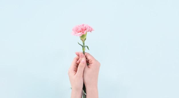 Donna che mantiene garofano rosa su sfondo blu tabella