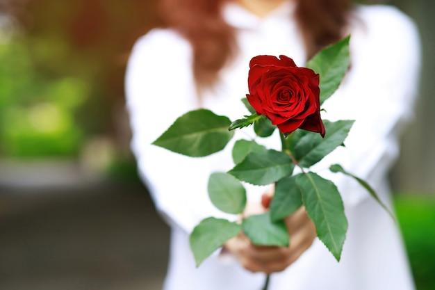 Donna che tiene una rosa rossa nelle mani
