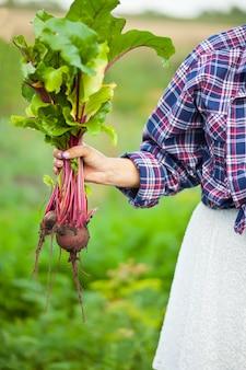 Donna che tiene una barbabietola matura. agricoltura locale, concetto di raccolta.