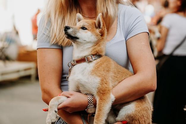 La donna tiene in braccio un cucciolo di akita. cammina con il tuo animale domestico in una giornata estiva