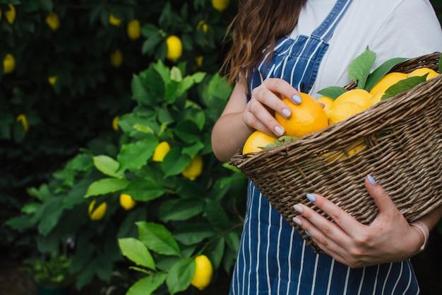 Una donna tiene in mano un cesto con limoni maturi in primo piano il concetto di agricoltura