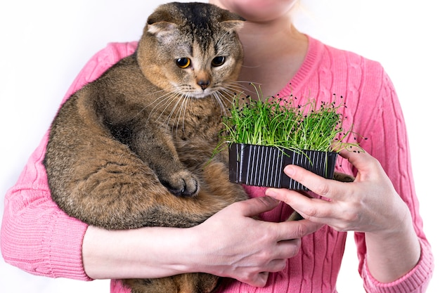 Una donna tiene un raccolto di microgreens nelle sue mani e nutre un gatto scottish fold con giovani germogli di cipolle