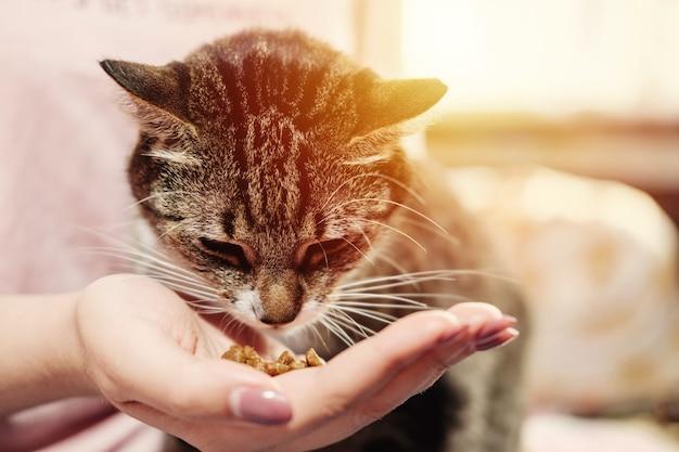 La donna sta dando da mangiare al gatto, il gatto mangia dalle mani della ragazza, gatto felice e soddisfatto con il proprietario