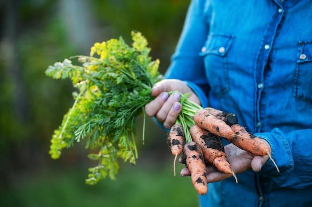 Una donna tiene in mano una carota fresca con le cime.