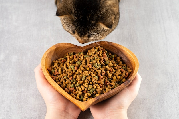 La donna offre una ciotola di cibo a un gatto marrone, animali domestici sani, cibo sano