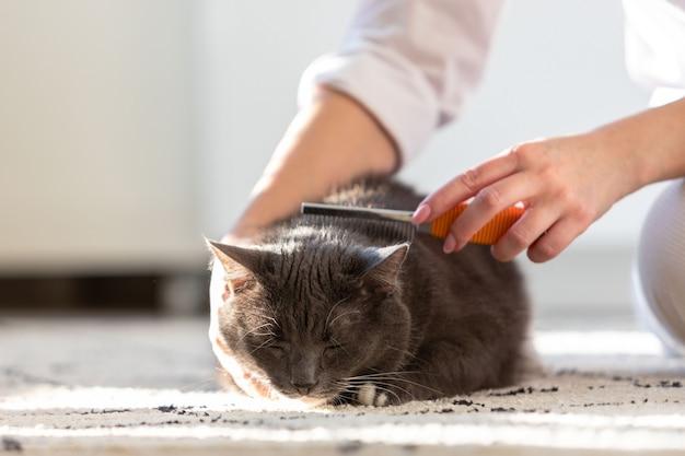 Proprietario della donna che si pettina, graffiando il suo soffice gatto nero