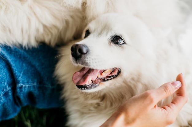 Donna petting adorabile cane