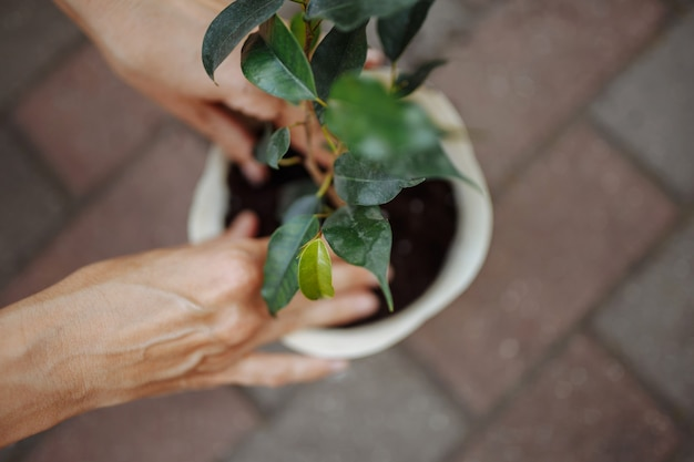 Donna che pianta un fiore in una pentola in un giardino. primo piano delle mani femminili che mettono il fiore nel terreno. giardinaggio domestico e concetto botanico.