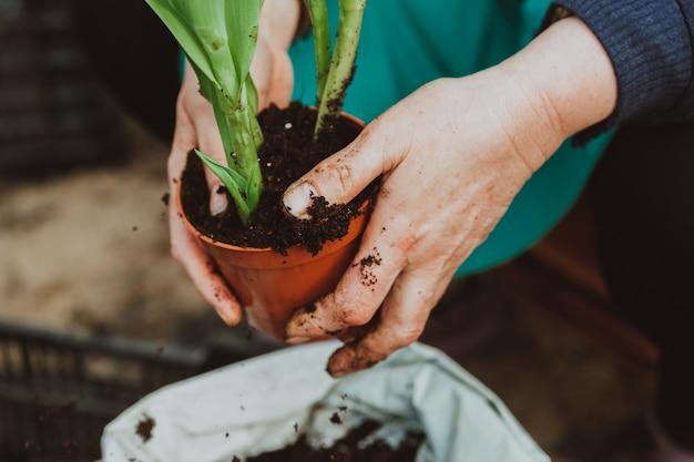 Donna che pianta i tulipani