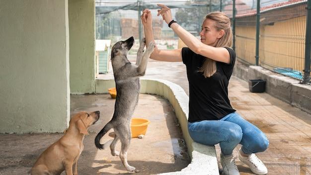 Donna che gioca con adorabili cani al riparo