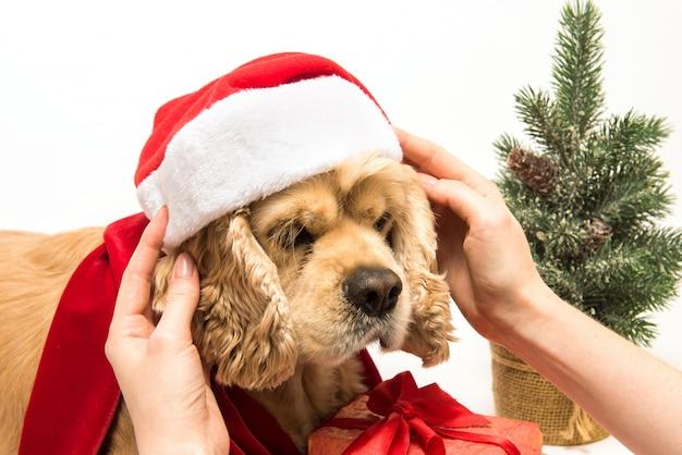 La donna mette il cappello di babbo natale sul suo cane