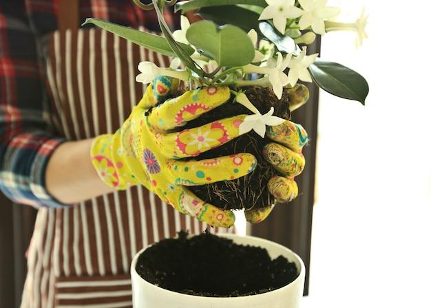Donna che mette una pianta in un nuovo vaso