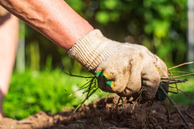 La mano di una donna sta pizzicando l'erba. disinfestazione e disinfestazione in giardino