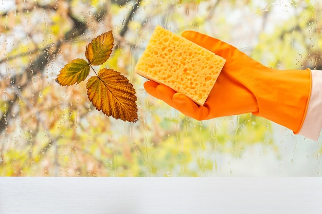 Mano della donna in guanto protettivo arancione con una spugna davanti alla finestra con gocce d'acqua e foglie autunnali. concetto di lavaggio e pulizia.