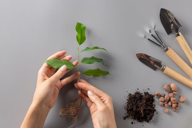 Mani della donna che tengono giovane piantina e set di attrezzi da giardinaggio