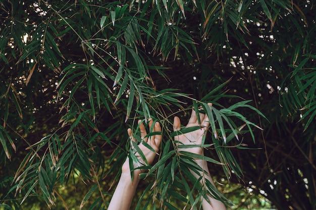 Le mani della donna che raggiungono verso i rami di bambù, fuoco selettivo