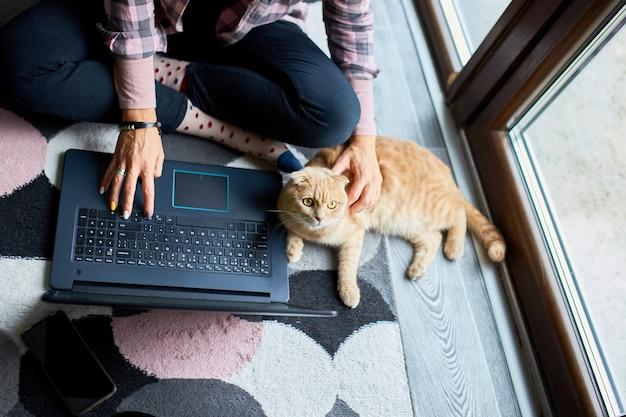 Donna che cerca il sito web veterinario sul laptop per registrare il gatto per la consultazione veterinaria