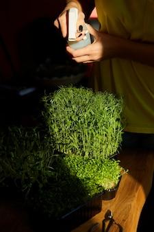 Donna che spruzza microgreen con acqua al tavolo di legno, luce intensa, vicino, copia dello spazio. giardiniere domestico, vegano, cibo sano.