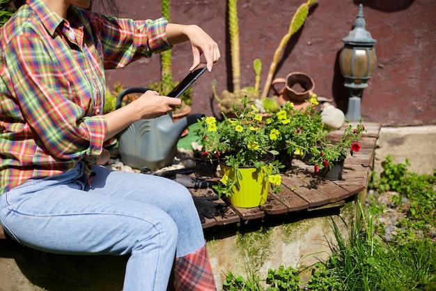 Donna che scatta foto con il cellulare della petunia dei fiori che ha piantato nel giardino estivo a casa, all'aperto, il concetto di giardinaggio e fiori.