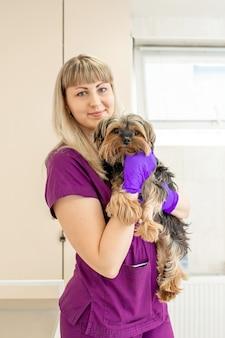 Il veterinario della donna nella clinica tiene nelle mani un cane felice della razza yorkshire terrier dopo l'esame