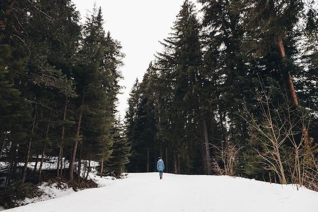 Donna che cammina in una foresta invernale. avventuriero, cammina tra enormi pini su una strada innevata. fantastico viaggio nel deserto invernale. vista posteriore.
