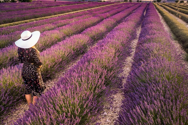 Donna con cappello bianco nel paesaggio tramonto estivo campo di lavanda vicino a valensole
