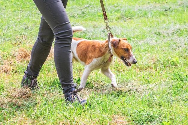 Donna con cane al guinzaglio durante una passeggiata