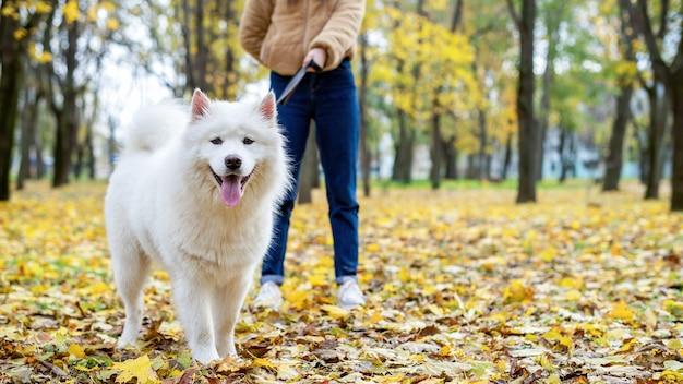 Donna con il suo cane in autunno in un parco. la donna sta tenendo il guinzaglio. foglie ingiallite a terra