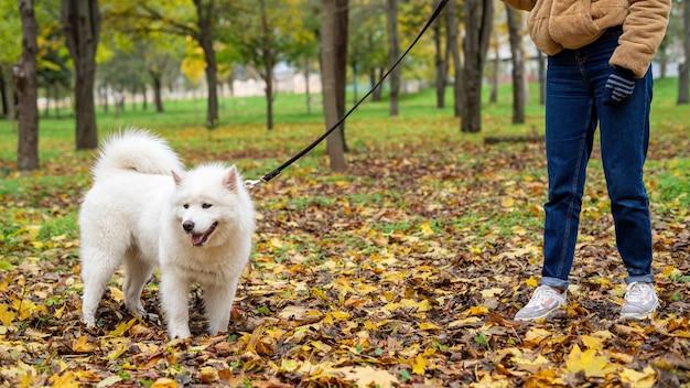 Donna con il suo cane in autunno in un parco. la donna sta tenendo il guinzaglio. foglie ingiallite a terra Foto Premium