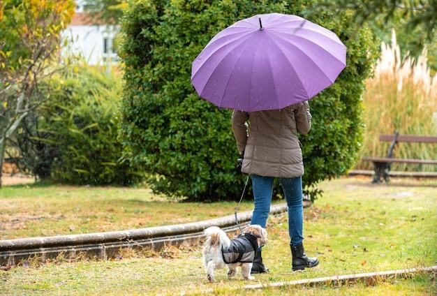 Donna con l'ombrello che cammina nel parco con il suo cane sotto la pioggia