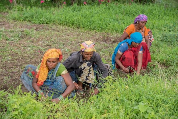 Lavoratrici che tagliano erba indesiderata dal campo del giardino