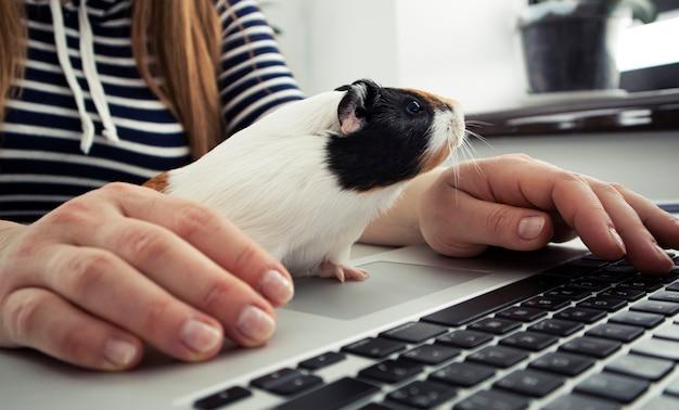 Donna che lavora con il computer portatile e la piccola cavia seduta vicino a lei