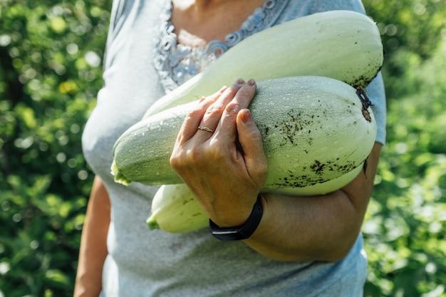 Mani delle donne che tengono le zucche contro il giardino verde. concetto di raccolta estiva